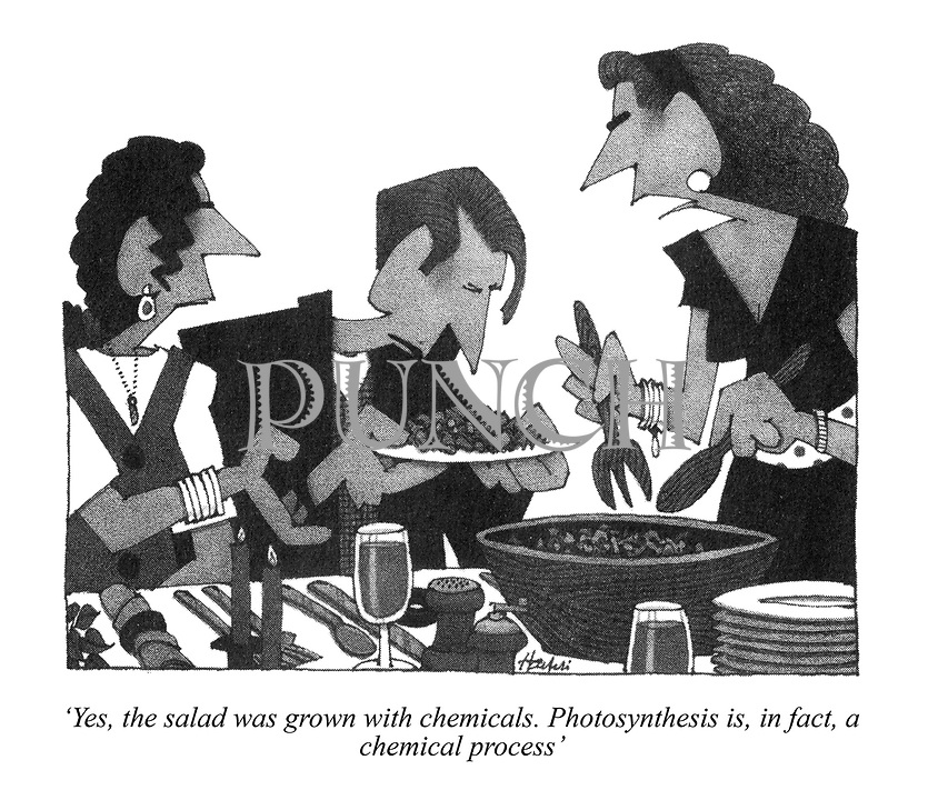 'Yes, the salad was grown with chemicals. Photosynthesis is, in fact, a chemical process'