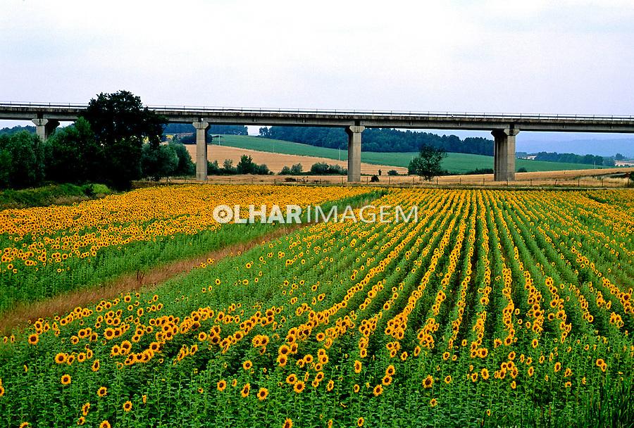 Plantação de girassóis na Toscana, Itália. 1998. Foto de Juca Martins.