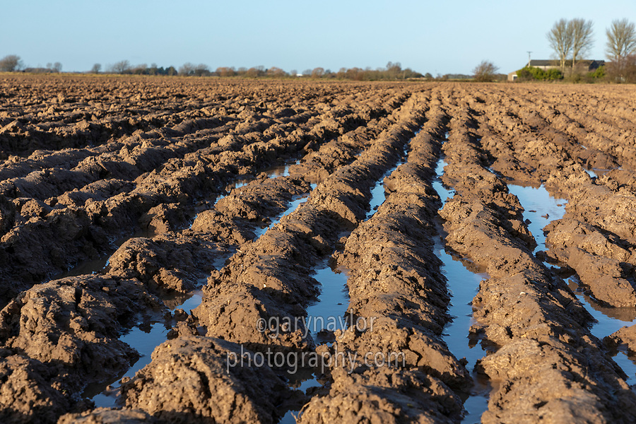 Water lying between seams in winter ploughing after heavy rainfall - Lincolnshire; December