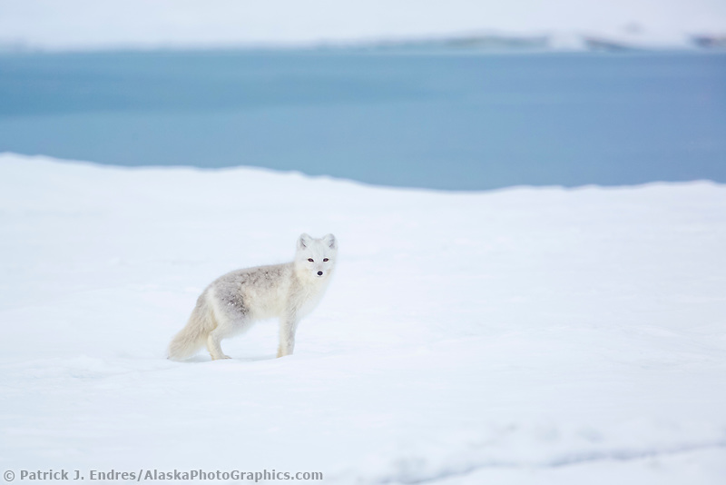 Beaufort Sea, Arctic National Wildlife Refuge, Alaska