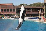 orca jumping at Sea World show