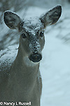 Snow covering deer during a snowfall