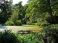 On the 20 acre estate of park and gardens is a secluded and tranquil lake surrounded by rhododendron