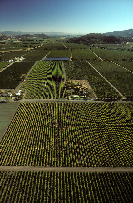 Aerial of vineyards near Rutherford, CA
