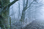 Frost covered trees behind a fence on a misty morning. Lake District, Cumbria, UK
