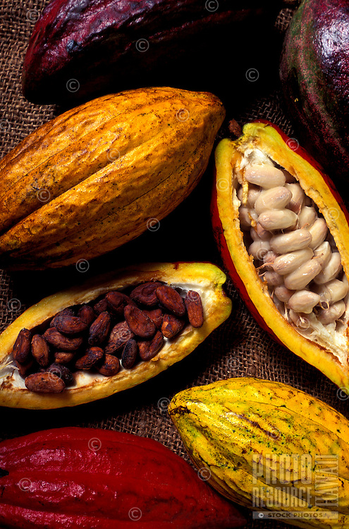 Whole and split cacao pods, showing the beans inside used to make chocolate, at Hodges Cacao Farm, Kona, Big Island