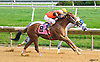 Celtic Moon winning at Delaware Park on 10/3/16