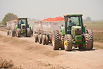 2002 John Deere 7810 tractor pulling semi trailers full of harvested tomatoes for canning..Mechanized tomato harvest in the Sacramento Valley..