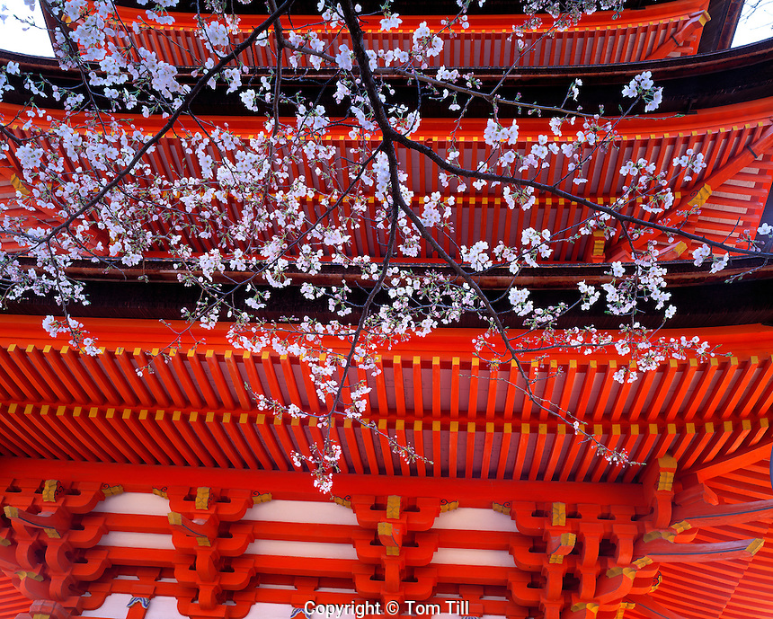 Cherry Blossoms at Five-story Pagoda, Miyajima Island, Japan  Historic pagoda from 1407   Near Itsukushima Jinja shire