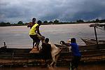 Transporte de boi no Rio São Francisco em Barra, Bahia..Ox transport in Rio São Francisco in Barra, Bahia.