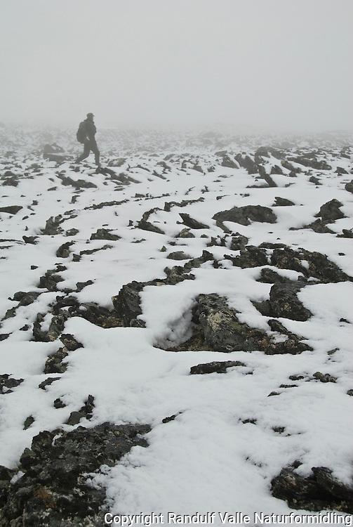 Fjellrypejeger i tåke ---- Hunter in fog