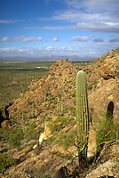 View of Tucson Mountain Park from Gates Pass. Sagauro cacti and paloverde shrubs,. Tucson Arizona USA.