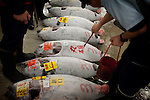 Tokyo, 1st of March 2010 - Tuna at Tsukiji wholesale fish market, biggest fish market in the world. 5:45 a.m, after an auction for the frozen tunas. 50 tunas were sold in a 15minute time.