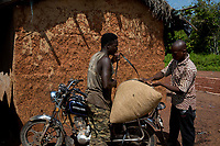 A man ties a sack of cocoa beans to the back of a motorcycle.