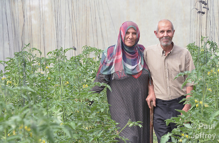 Moyasar El Za'anen and her husband Najeeb Zaneen stand in their greenhouse in Beit Hanoun, Gaza. Their home was destroyed, and their greenhouse damaged, by an Israeli air strike in 2014. They have received help in reestablishing their farm from International Orthodox Christian Charities, a member of the ACT Alliance.