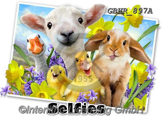 Howard, SELFIES, paintings+++++,GBHR897A,#Selfies#, EVERYDAY ,eastern,sheeps