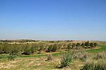 Israel, Negev, Beeri forest in the Besor region