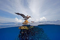 Cocos Island and Costa Rica