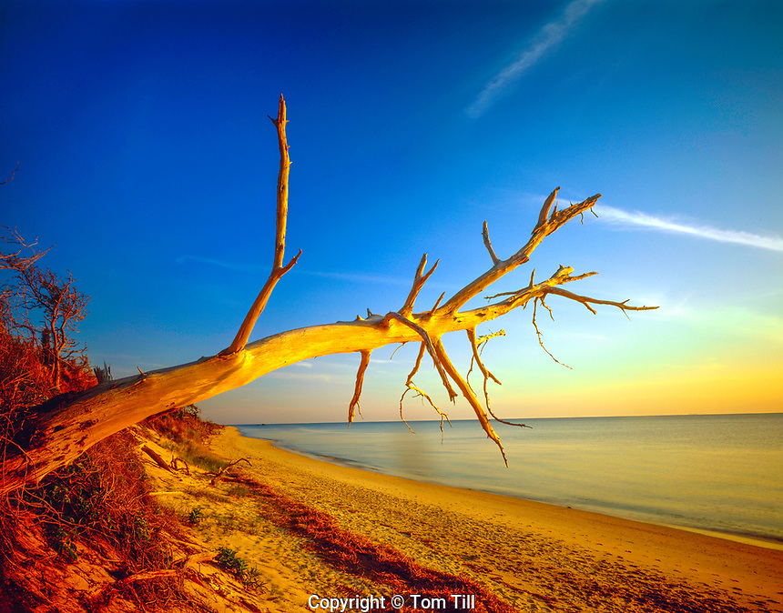 Forest snag along shore, Cape May, New Jersey, Delaware Bay
