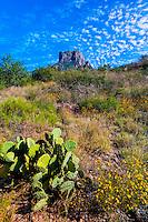 Prickly Pear Cactus, Chisos Mountains, Big Bend National Park, Texas USA.