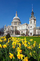 Great Britain, London: St Paul's Cathedral with Spring Daffodils | Grossbritannien, England, London: die St Pauls Cathedral im Fruehling