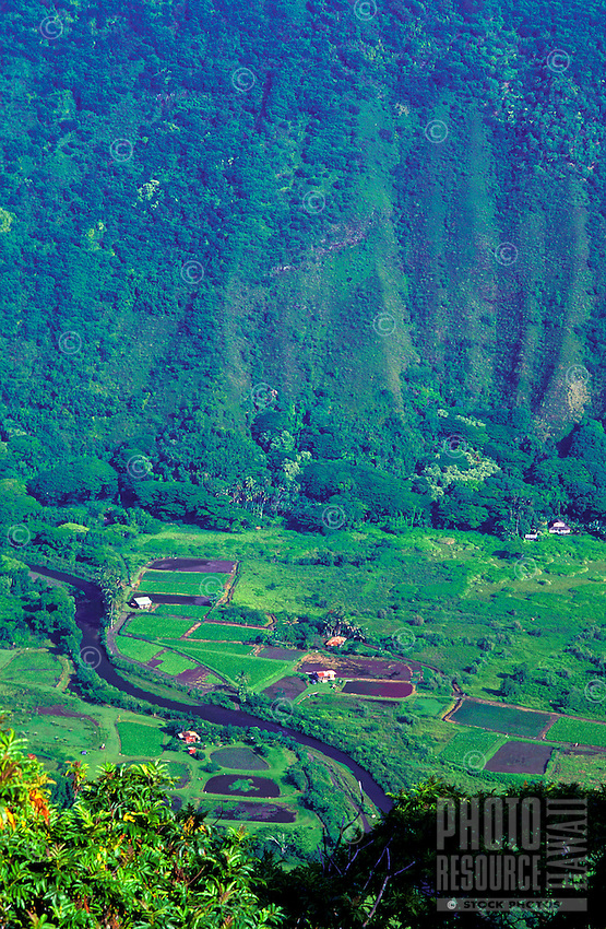 Expanse of cliff walls with taro fields and the Wailoa River winding through Waipio Valley, taken from the lookout above