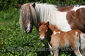 Bob, ANIMALS, REALISTISCHE TIERE, ANIMALES REALISTICOS, horses, photos+++++,GBLA4003,#a#, EVERYDAY