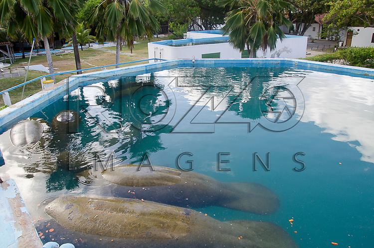 Peixes-boi-marinho (Trichechus manatus) no Centro de Preservação do Peixe-Boi Marinho - vinculado ao ICMBio - Instituto Chico Mendes, Ilha de Itamaracá - PE, 12/2012.
