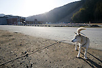 A dog that survived the tsunami visits the remains of Okawa Elementary School with its owner on March 11, 2016 in Ishinomaki, Miyagi Prefecture, Japan. Exactly 5 years earlier 74 out of the school's 108 students lost their lives as a result of the tsunami on March 11th, 2011. There are plans to rebuild the school but as yet this has not been fixed. The fate of the destroyed buildings is also expected to be decided soon with residents of the town divided as to whether they should be preserved as a memorial or removed. (Photo by Yusuke Nakanishi/AFLO)