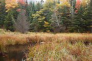 Wetlands area along Route 113 during the autumn months in the White Mountains, Maine  USA