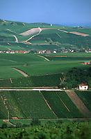 Europe/France/Champagne-Ardenne/51/Marne/Hautvillers: Vignoble Champenois de la Vallée de la Marne