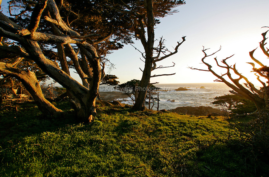 Cypress trees along the coast at Point Lobos State Park CA, USA.