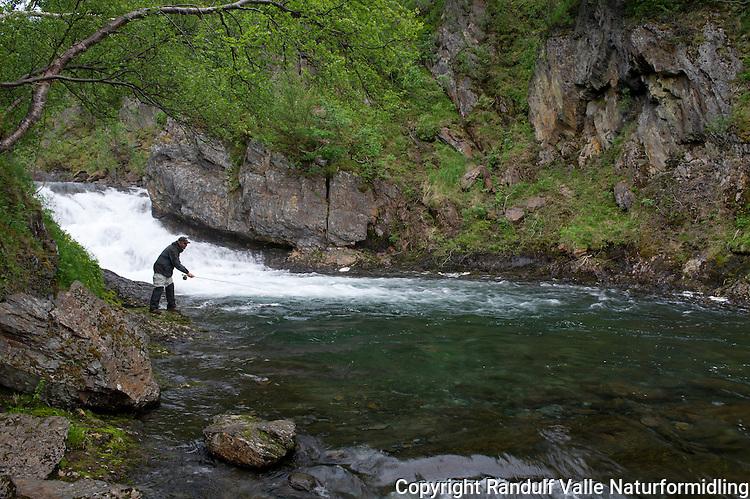 Mann fisker laks i Kvalsundelva. ---- Man flyfishing in Kvalsundelva.