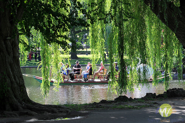 Boston Public Garden. Swan Boats. Dual-pontooned pleasure boats on Boston Garden pond. Since 1877.