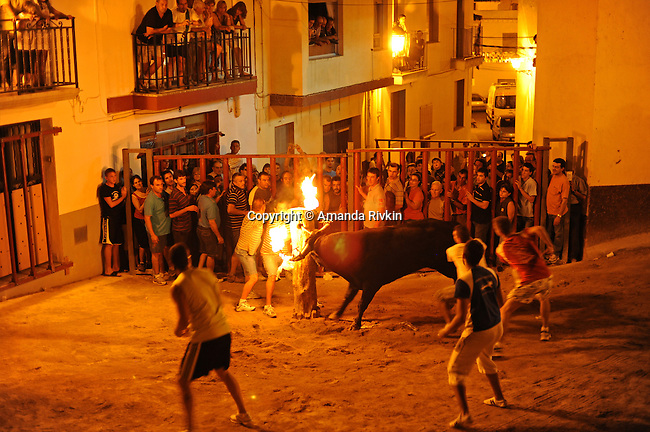"Men prepare a bull for an ""embolado"" ceremony, where flaming charcoal is affixed to the bull's horns, during the municipal fiestas in Costur, Spain on August 19, 2009.  For several days, wild bulls and cows take their turn roaming the streets and square surrounding the church in Costur as people jump in and out of human cages to taunt and animate them; the ""embolado"" is a tradition that pre-dates electricity so people would be able to see the illuminated bull as he runs through the darkened streets."