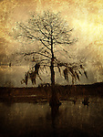 A lone cypress, its branches hanging with moss, stands against a golden sky in a Louisiana swamp.