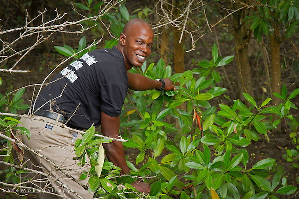 Raymond Hinds Tour guide showing the red Mangrove at the Golden Grove Mangrove re- development project