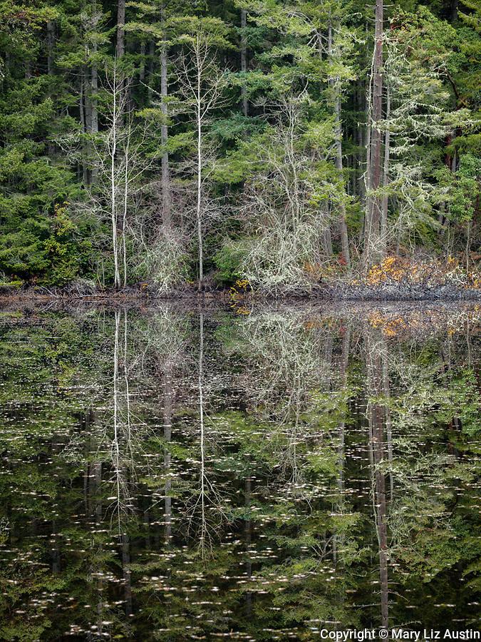Vashon Island, Washington: Winter trees on shoreline of Fsiher Pond