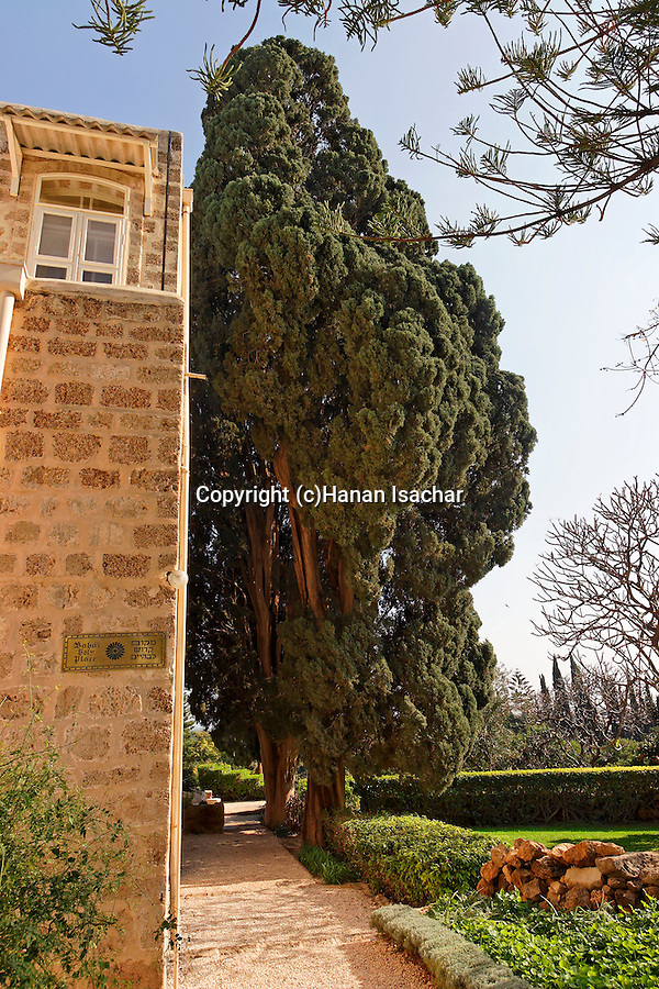 Israe, the Galilee. Cypress tree in the Bahai Garden near Nahariya