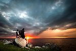 Dixie, the border collie, lays in the grass by Oyster Bay in Wakulla County, FL at sunset.<br />