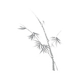 Beautiful delicate design of Oriental Zen ink painting artwork. Bamboo stalk with young leaves. Asian style illustration on white background.