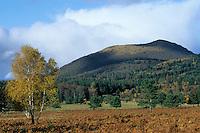 Europe/France/Auvergne/63/Puy-de-Dôme/Parc Naturel Régional des Volcans/Puy-de-Dôme: Le Puy-de-Dôme et la chaine des puys