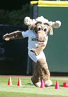 04 October 2009: Seattle Mariners Mariner Moose took part with fellow mascots in a pre game obstacle course before the start of the game against the Texas Rangers. Seattle won 4-3 over the Texas Rangers at Safeco Field in Seattle, Washington.