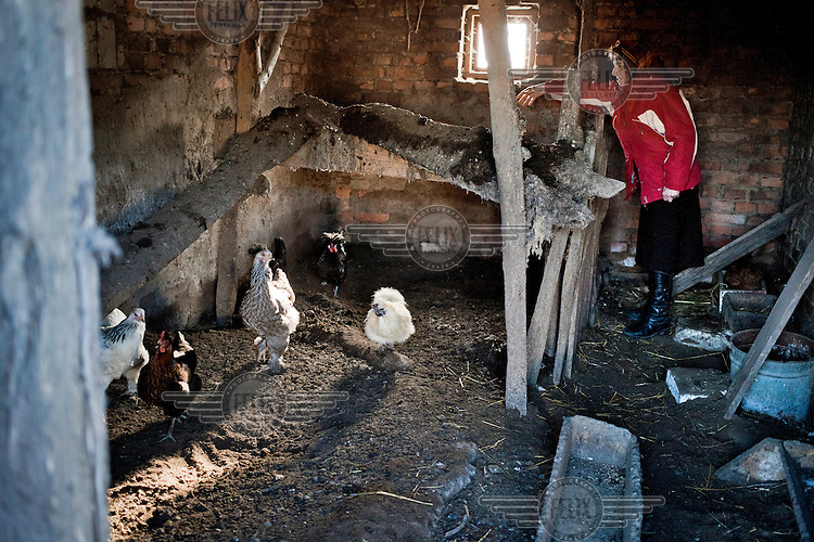 Pensioner Krystyna Trzcinska, 68, feeds hens on her farm.<br /> Mrs Trzcinska receives a very small pension, which is not sufficient to cover her basic needs. The Polish pension system is running a chronic deficit and requires financing from the general tax revenue.
