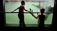 Two young boys check out the otter exhibit at  Grandfather Mountain in the Blue Ridge Mountains of North Carolina.