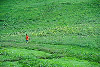 Boy catching butterflies in green field.