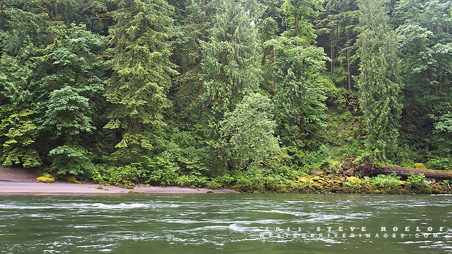 Lush vegetation along the banks of the Sandy River.