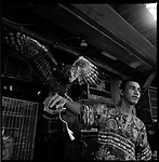 Jakarta, Indonesia. August, 2000. An eagle sits on top of the arm of his seller. . The illegal animal trade has flourished since Suharto resigned from office in 1998 a result of the Asian economic crisis. The eagle ranges in prices from $25 to $50 US dollars.