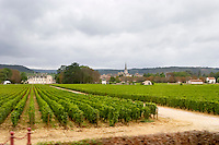 vineyard ch de meursault cote de beaune burgundy france