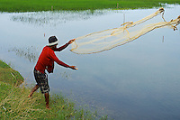 Throwing his net a farmer is catching fish in the rice fields during the Monsoon Season rural area near Battambang, Cambodia